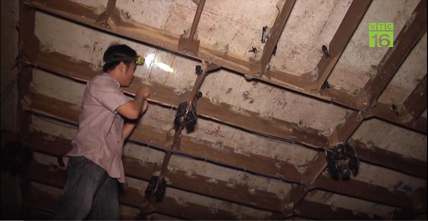 Tuấn Anh khai thác tổ yến ở Nhà Yến Nam Phú I